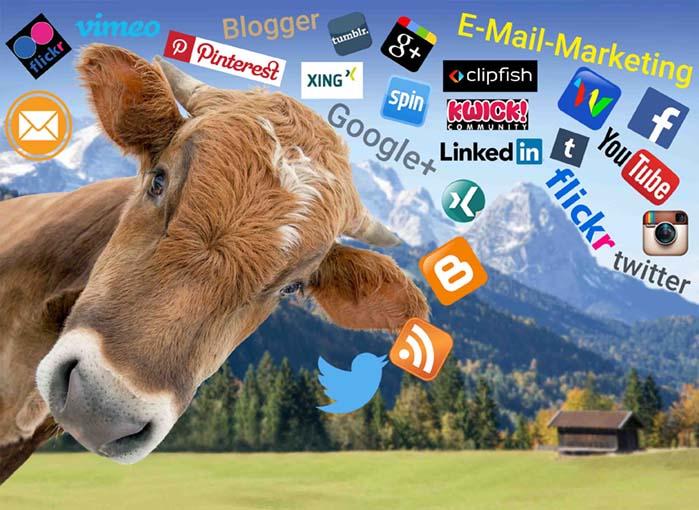 Kuh vor Berglandschaft und Wiesen